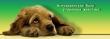 Помогите в поисках:пропала собака-помесь эрдельтерьера, сука, 2 года.